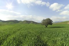 Tree alone in a sunny green field. Tree alone in a green field with sun ray stock photography