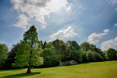 Tree alone in a sunny meadow Royalty Free Stock Photo