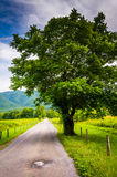 Tree along a dirt road, at Cade's Cove, Great Smoky Mountains Na Royalty Free Stock Photo