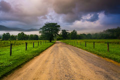 Tree along a dirt road, on a foggy morning at Cade's Cove, Great Stock Photography