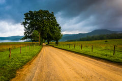 Tree along a dirt road, on a foggy morning at Cade's Cove, Great Stock Photos