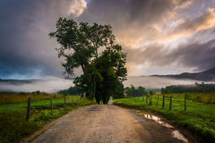 Tree along a dirt road, on a foggy morning at Cade's Cove, Great stock photo