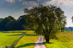Tree along a dirt road in rural Howard County, Maryland. Royalty Free Stock Images