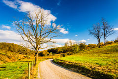 Tree along a dirt road in rural York County, Pennsylvania. Stock Photography