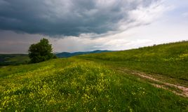 Tree along the path through grassy meadow. Grey rainy clouds approaching on a summer windy day Stock Photo