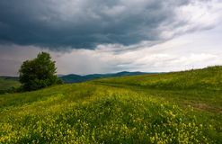 Tree along the path through grassy meadow. Grey rainy clouds approaching on a summer windy day Royalty Free Stock Images