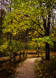 Tree along a path in Nixon Park, near York, Pennsylvania. Royalty Free Stock Photos