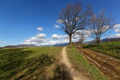 A tree along the path. With shadows Royalty Free Stock Photo