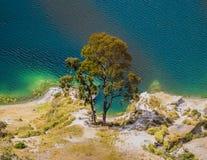 Tree along Quilotoa lagoon shoreline. Detail of amazing tree along Quilotoa lagoon shoreline, volcanic crater lake in Ecuador Stock Photos