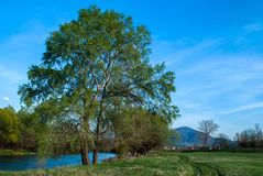 Tree along the river on a spring day near levee. Landscape and Nature concept image royalty free stock image