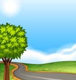 A tree along the road Stock Photos