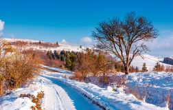 Tree along the road through snowy hillside. Lovely winter forenoon in mountains. spruce forest in the distance Royalty Free Stock Photo