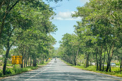 Tree along the road in Songkla,Thailand Stock Image