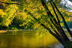 Tree along the Shenandoah River, in Harper's Ferry, West Virgini Royalty Free Stock Image