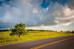 Tree along Skyline Drive at Big Meadows, in Shenandoah National Royalty Free Stock Photos