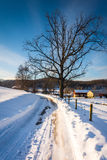 Tree along a snow-covered road in Seven Valleys, Pennsylvania. Royalty Free Stock Photo