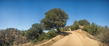 Tree Alongside Dirt Road Stock Images