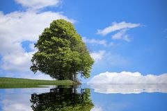 Tree with the alpine lake and the thick foliage in summer Stock Photos