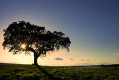 Tree in Alqueva Lake Royalty Free Stock Image