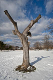 Tree Amidst the Snow. Tree and snow in the Bronx, NYC Royalty Free Stock Photo