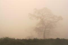 Free Tree Among Fog Royalty Free Stock Photos - 22426908