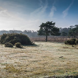 A Tree Amongst Trees. Focussing on a small tree in the New Forest national park royalty free stock images