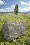 Tree and ancient orange lichens growing on rocks in Centennial Valley near Lakeview, MT Royalty Free Stock Image