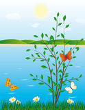 Tree And A Butterfly On The River Bank Royalty Free Stock Images