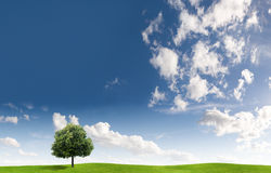 Tree And Cloudscape Royalty Free Stock Images
