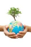 Tree And Globe Royalty Free Stock Photography