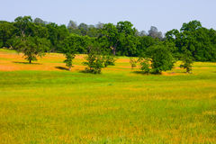 Tree And Grass Landscape Stock Photography