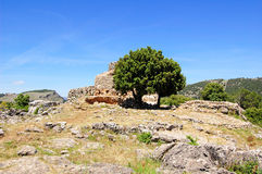 Tree And Nuraghe Stock Images