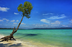 Tree on Andamans. Very realistic HDR picture taken on Havelock, Andaman & Nicobar Islands, India royalty free stock photography