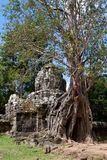 Tree On Angkor Ruins Stock Photos
