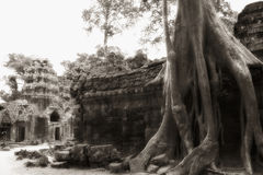 Tree at Angkor temple wall Royalty Free Stock Photos