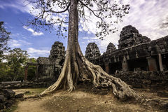 Tree in Angkor Wat, Cambodia, South East Asia. Stock Photography