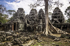 Tree in Angkor Wat, Cambodia, South East Asia. Royalty Free Stock Photos