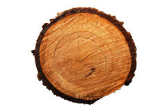Tree annual ring (Die cutting) Stock Photos