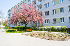 Tree and apartment building Stock Image