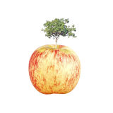 Tree Apple Stock Photography