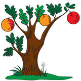Tree with apples Stock Images