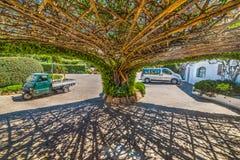 Tree arbor in Poltu Quatu. Sardinia Stock Photo