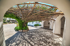 Tree arbor in Poltu Quatu. Sardinia royalty free stock photography