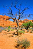 Tree and Arch. Moab, Utah, Arches national Park Royalty Free Stock Photography
