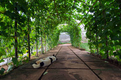 Tree arch with sleeping dog in the foreground in Chiangmai city Thailand. View of tree arch with sleeping dog in the foreground in Chiangmai city Thailand Stock Image