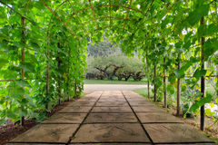 Tree arch walking path in national garden of Chiangmai city Thailand Royalty Free Stock Photo