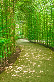 Tree arched enclosed sunlit pathway Royalty Free Stock Image