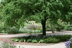 Tree arching over garden Royalty Free Stock Image