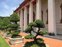 Tree and Architecture of Thailand Royalty Free Stock Images