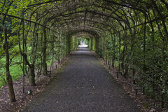 Tree Archway. An archway in Hampton Court Palace leading to a maze, Hampton, England Royalty Free Stock Image